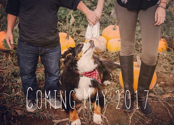 """Amy Roloff on Instagram: """"Did you hear and see the news?  I'm going to be a grandma!  I'm too young for this! I'm so excited and can't wait!  So happy for Zach &…"""""""