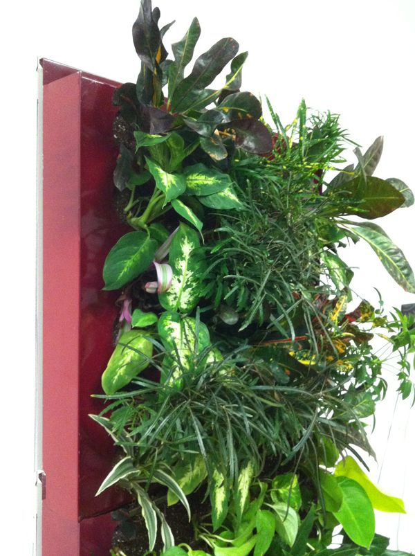 Green Wall Systems | Patented Green Living Walls U2013 Grow Vertical