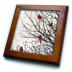 "Cardinals Photographed by Angelandspot - 8x8 Framed Tile by Cassie Peters. $22.99. Dimensions: 8"" H x 8"" W x 1/2"" D. Inset high gloss 6"" x 6"" ceramic tile.. Keyhole in the back of frame allows for easy hanging.. Solid wood frame. Cherry Finish. Cardinals Photographed by Angelandspot Framed Tile is 8"" x 8"" with a 6"" x 6"" high gloss inset ceramic tile, surrounded by a solid wood frame with predrilled keyhole for easy wall mounting.. Save 15%!"