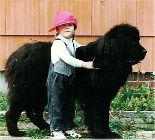 Newfoundlands, see why they are the best?