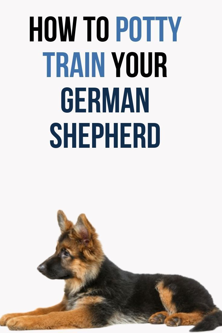 This Post Will Show You How To Easily Potty Train Your German