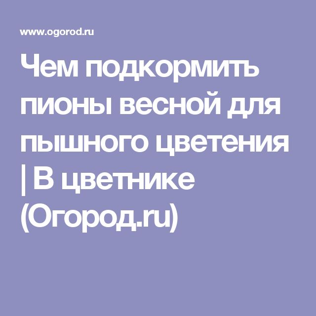 Чем подкормить пионы весной для пышного цветения | В цветнике (Огород.ru)
