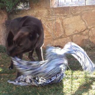 Play time:-) #dogs #instagramdogs #puppy #petlovers #like4like #followme