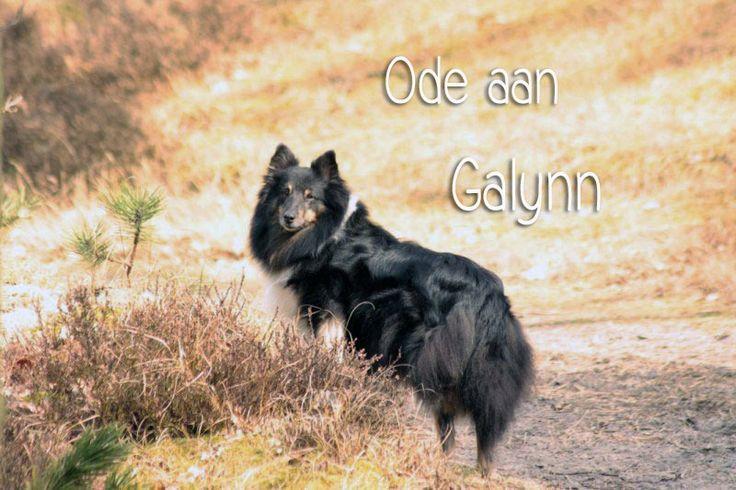 Ode aan Galynn, onze roedelleidster...