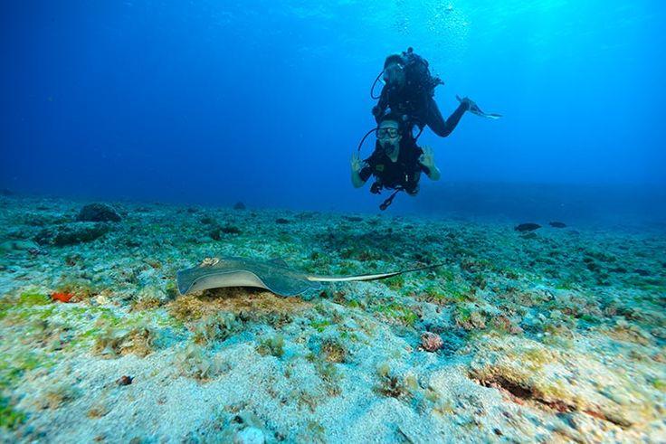 Mergulho em Fernando de Noronha (Foto: Arquivo Pessoal/Daniela Carasco)