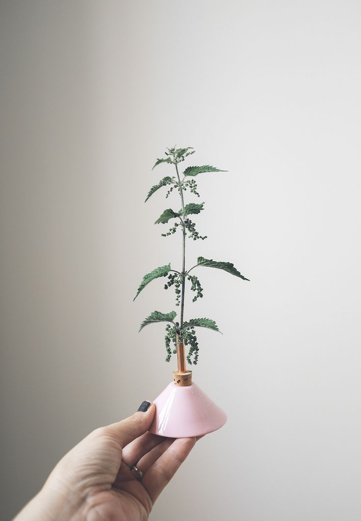Um, this is totally a sleek, modernized, mini Charlie Brown Christmas Tree Stand! And it's super pretty, too! CONSILIUM VASE