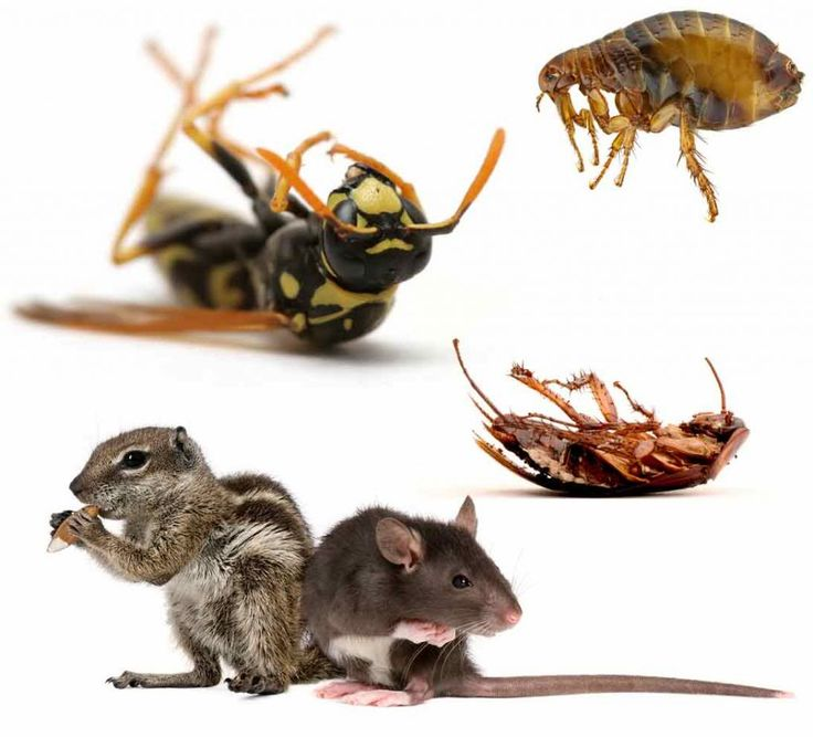 #Cockroach #Infestations #in #Office #Kitchens