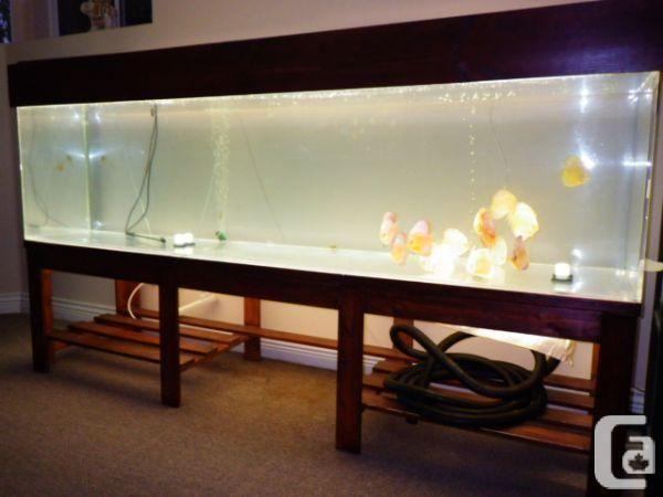 800 gallon aquarium for sale huge 240 gallon aquarium u0026 stand maple ridge for sale in vancouver fish tank maintenance