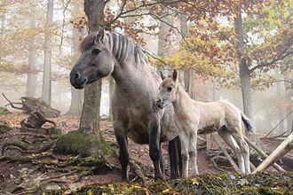 Domestication du cheval — Wikipédia