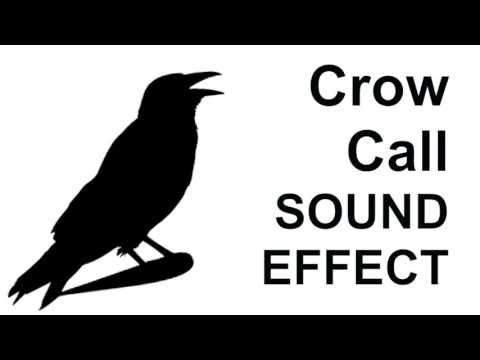 Crow Call SOUND EFFECT Crow alarm Calls CROW SOUNDS - YouTube