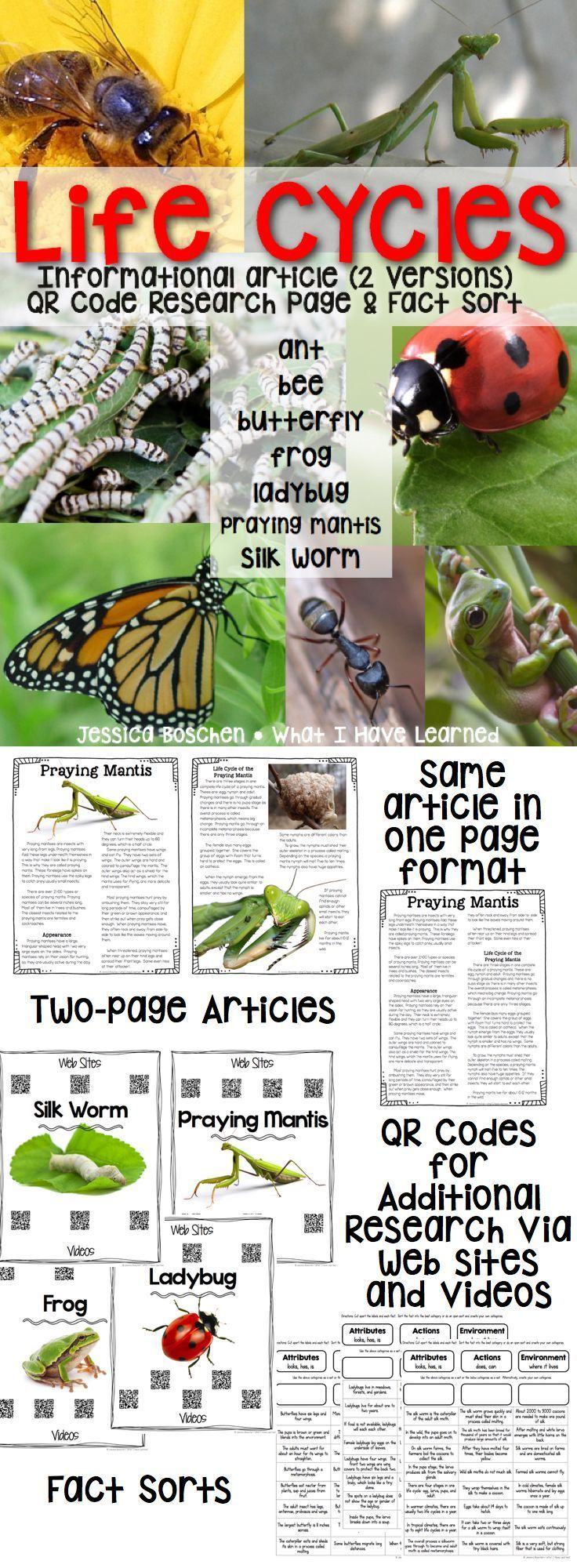 Life Cycle Articles in two versions (two-page with photos and one page with just text), QR Codes for additional research via web sites and videos, and Fact Sheets useful for sorting.  These are perfect for my second and third grade students.