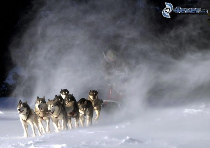 Pin By Maggie Pitsikalis On Cute Dogs Dog Sledding Dogs