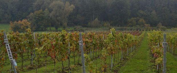 Le marché du vin belge vit un véritable boom