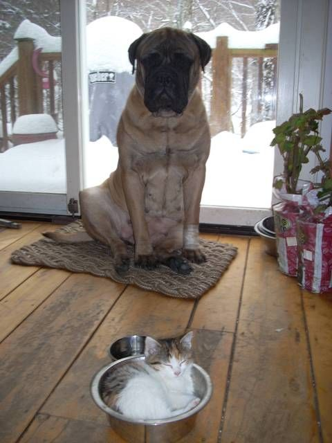 The cat is in my bowl again