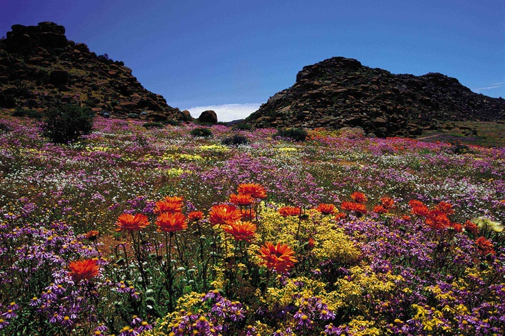 Cape Town's West Coast http://www.perfecthideaways.co.za/ #flowers #capetown #beauty