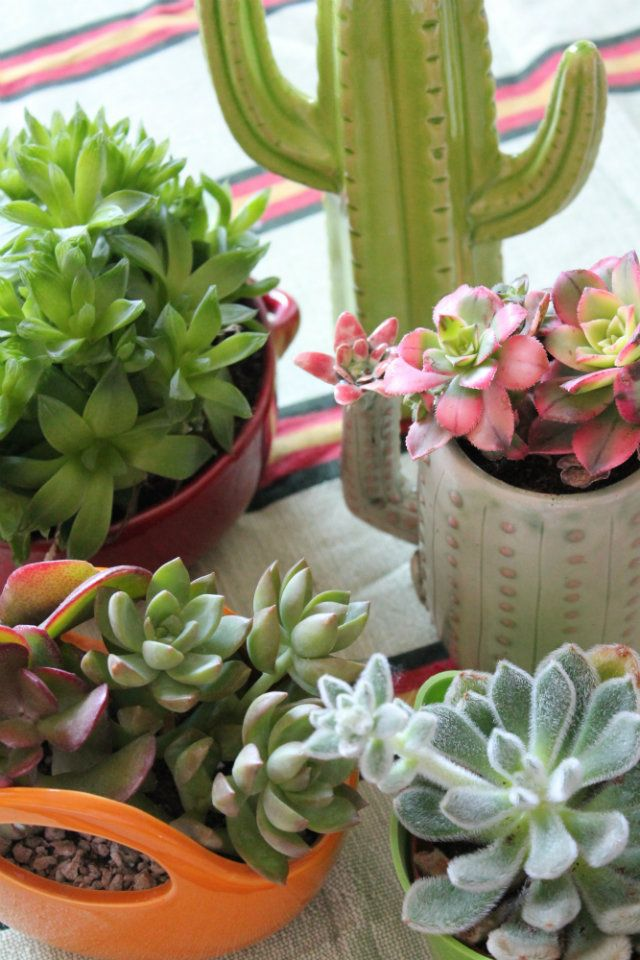 Urban Jungle Bloggers: My Plant Gang by @labombetta