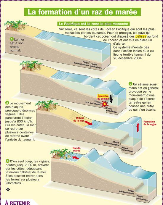 Fiche exposés : La formation d'un raz de marée