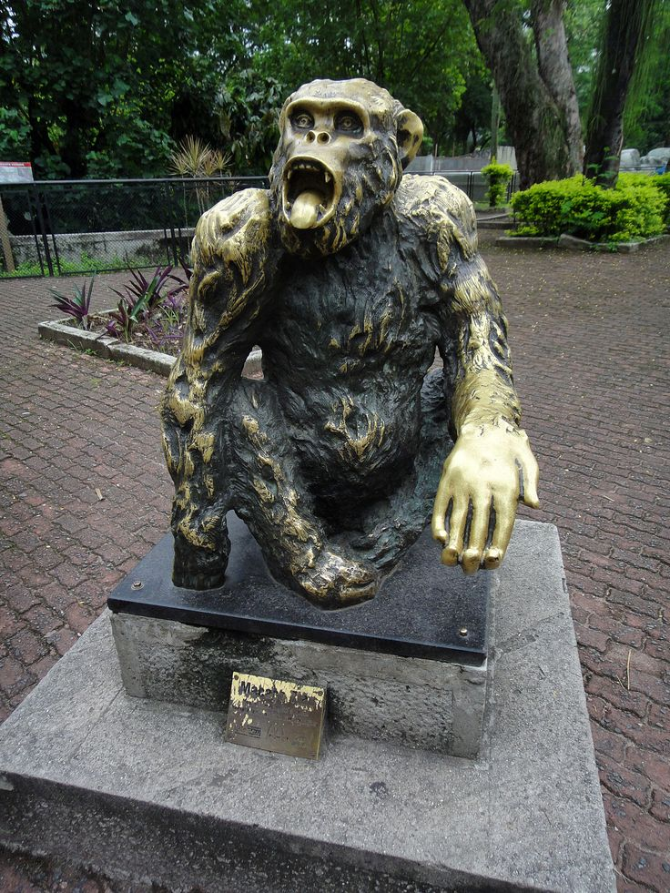 TIL that in the elections for mayor of Rio de Janeiro in 1988 the population was so unhappy with politicians that a well-known monkey of the local zoo received over 400k votes.
