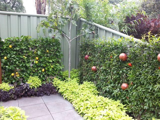 A Foodieu0027s Garden: Melbourne International Flower And Garden Show 2013  Espalier Pomegranate Tree Against Fence