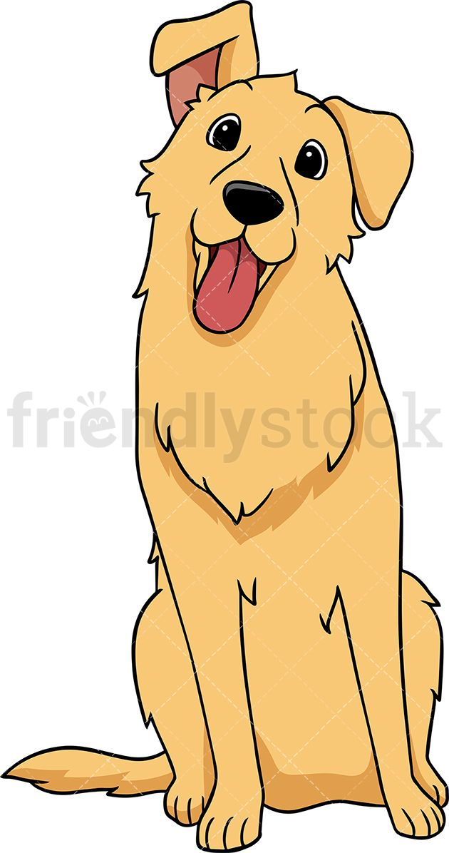 Golden Retriever Dog Tilting Its Head Golden Retriever Cartoon