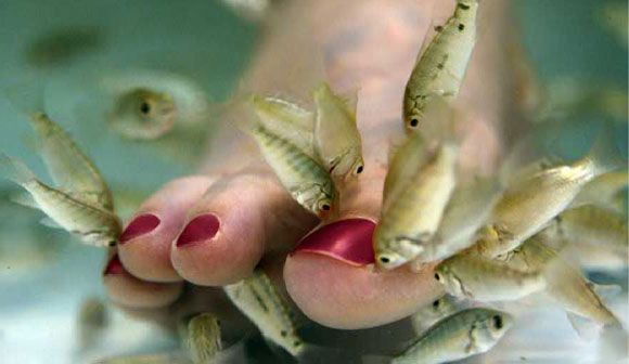Check out our fish spa in our Amsterdam store! http://www.luxury-delhi-hotels.com/blog/wp-content/uploads/2012/03/fish-spa-delhi-india.jpg