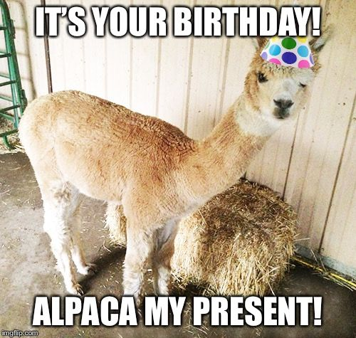 Alpaca Birthday Alpacas Llama Birthday Happy Birthday