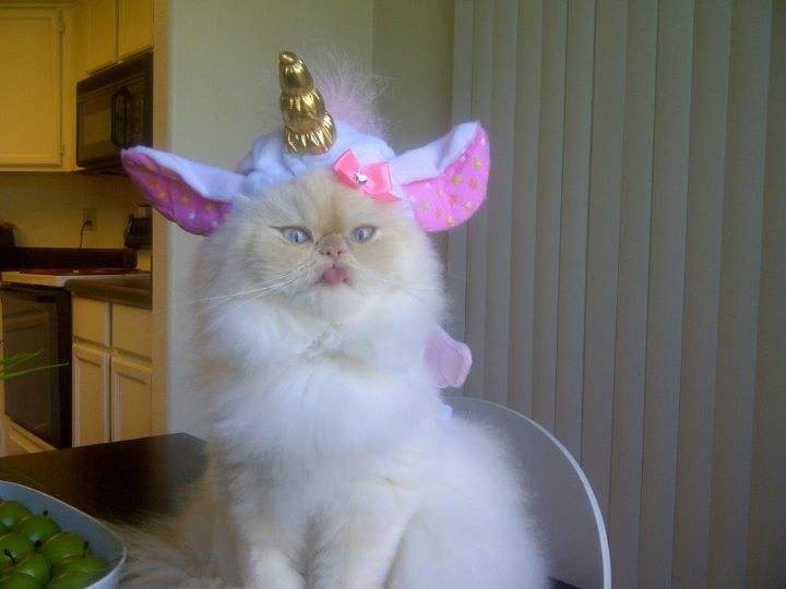 Unicorn Persian.  AWESOME!