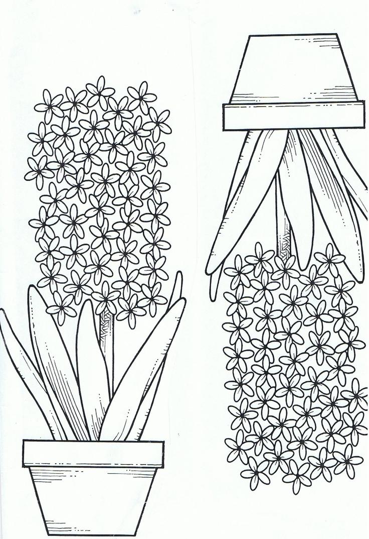 kleurplaat hyacint