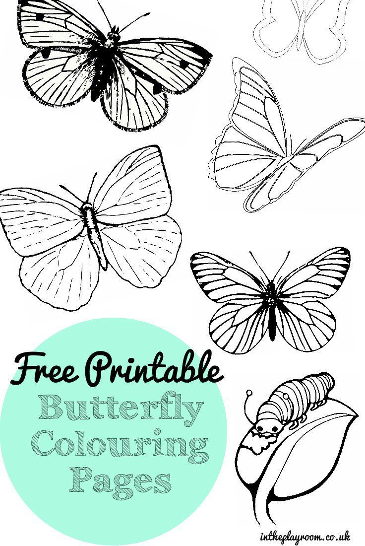 Co co color printouts in bangalore - Free Printable Butterfly Colouring Pages