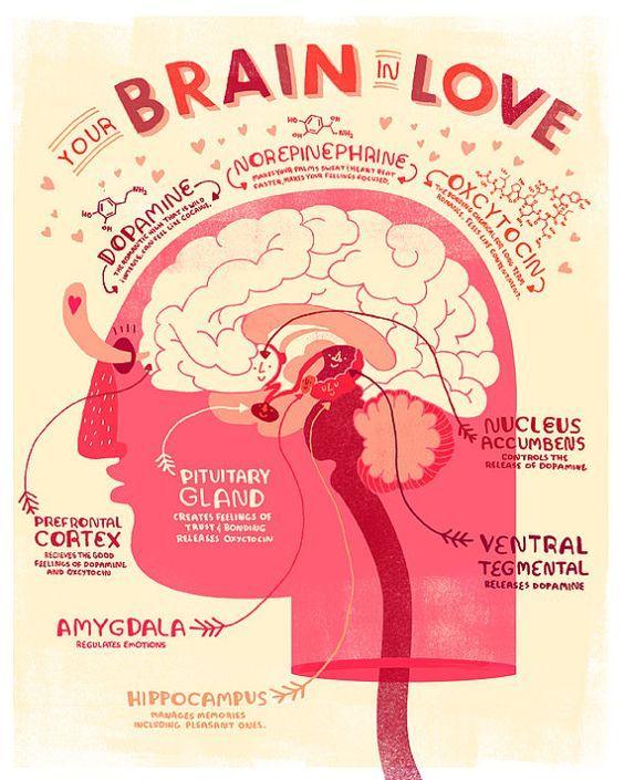 Innamoramento. Ci innamoriamo per colpa della feniletina. #Innamoramento #amore #psicologo