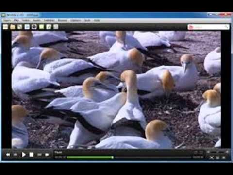 There are dozens of multimedia player right now and one that stands out is the free download media player, UMPlayer. This is a multi-platform software that is capable of opening and reading almost all types of file formats whether it is a video format or an audio one.To get more info:  http://mediaplayere.net