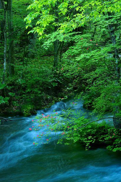 Oirase Aomori Japan 奥入瀬 春流 #緑 #green