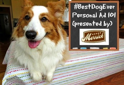By Dogs for Dogs: How to Craft an Ad for a Pet Parent When You're the #BestDogEver (plus enter to win a 1-month supply of dog food from @MerrickPetCare!) #dog food -  #corgis