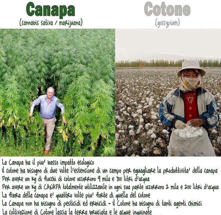 Lo sapevi? #hemp #canapa #green #sostenibile #ecologia #green