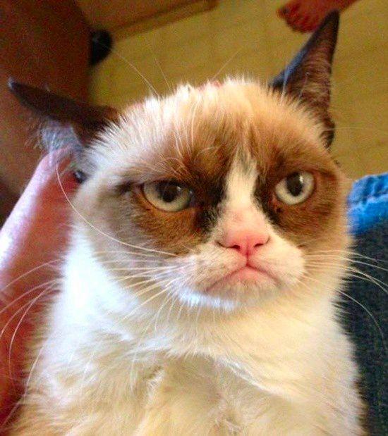 Σοβαρά τώρα.. Παγκόσμια μέρα γάτας και οργασμού, μαζί;