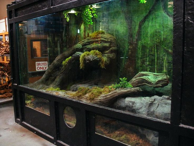 East bay vivarium 39 s asian water dragon for Harry potter fish tank