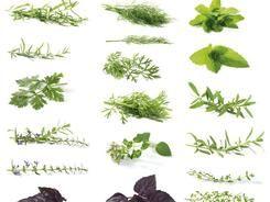 Jak se léčit pomocí bylinek a léčivých rostlin
