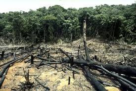 perdida de la biodiversidad nos esta afectando cada ves mas