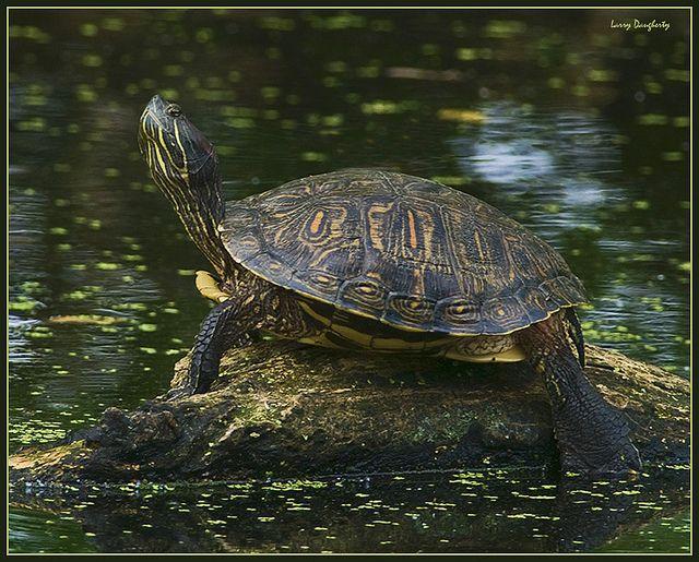 I am....Turtle!