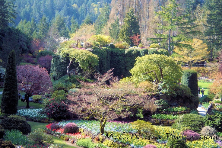 55 best images about hometown of victoria on pinterest - Best time to visit butchart gardens ...