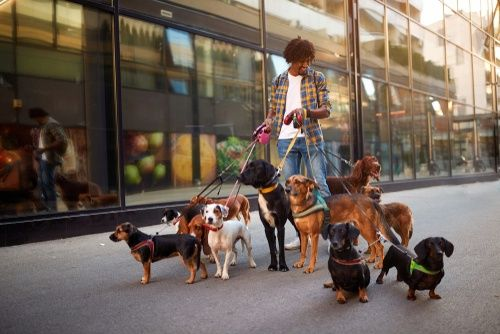 12 Part Time Jobs Working With Dogs And Other Animals Jobs