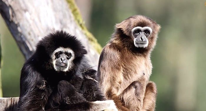 Rossmann Serengeti Park Gutschein Freizeitpark Park Tierpark