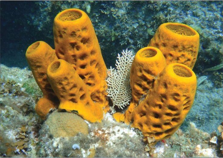 10 Best Images About Sponges On Pinterest
