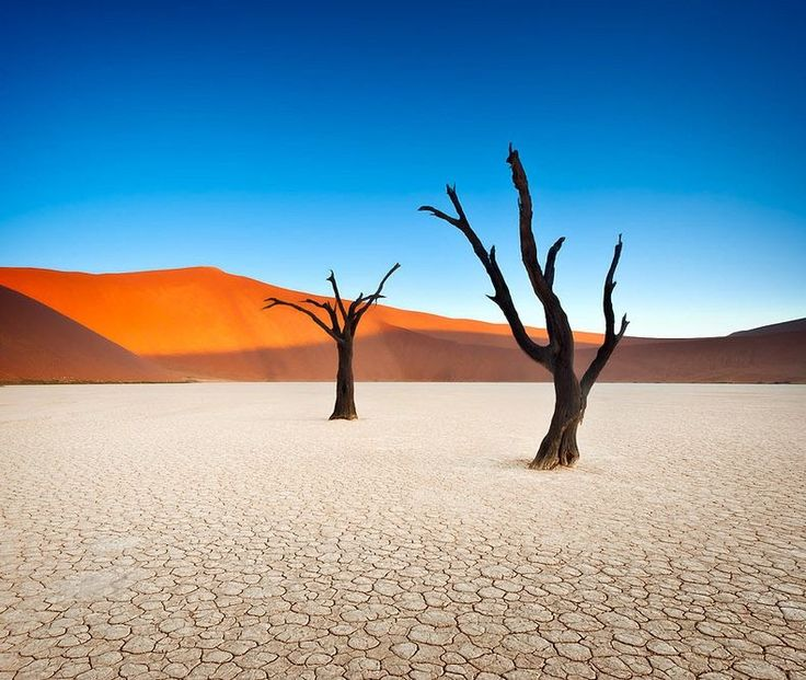 A clock should be melting somewhere.   Deadvlei, Namibia.