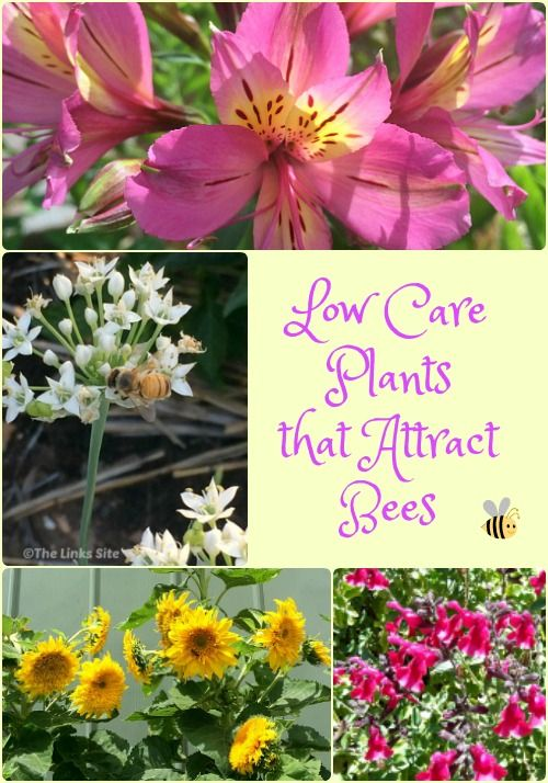 Low Care Plants that Attract Bees