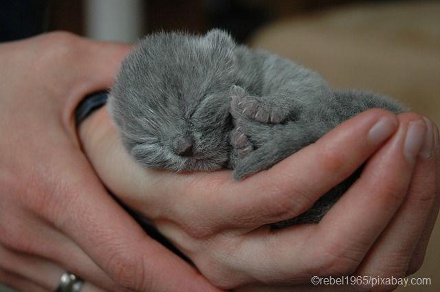 Precious!!!!!!!