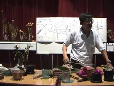 Curso básico de cultivo de Orquídeas - Parte 4 - YouTube