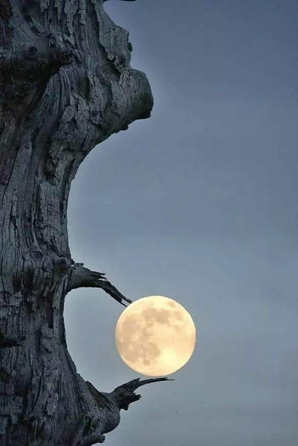 La belleza de la luna 919f3184d8127d4eedf468c158100be8
