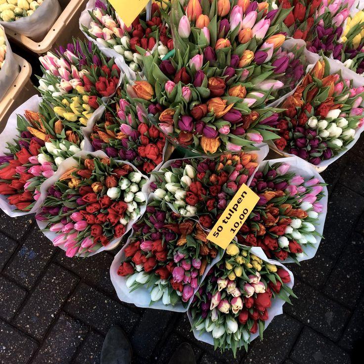 Resultado de imagem para amsterdam market tulip