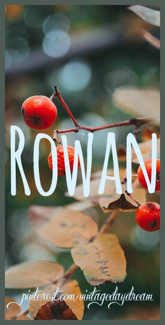 Baby Boy or Girl Name: Rowan. Meaning: Red; Red Berry Tree. Origin: Gaelic. https://www.pinterest.com/vintagedaydream/baby-names/?etslf=3548&eq=baby
